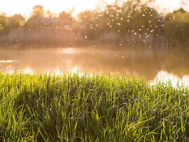 Lästige Quälgeister: Sommerzeit ist Mückenzeit